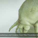 16 Audacious and Creative Dust Mite Prevention Ideas