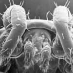 Top 6 Scary Dust Mite Facts