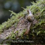 Rising Damp Solutions