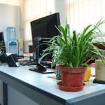 Can Indoor Plants improve Air Quality?