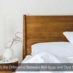 What's the Difference Between Bed Bugs and Dust Mites?