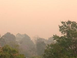 Bush Fires NSW