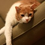 How to Keep Your Pet Cats Even If You are Allergic to Them