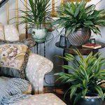 NASA studies show common plants improve indoor air quality