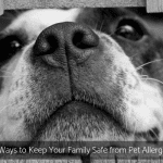 5 Ways to Keep Your Family Safe from Pet Allergies