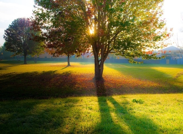 8 Tips for Controlling Your Autumn Allergies