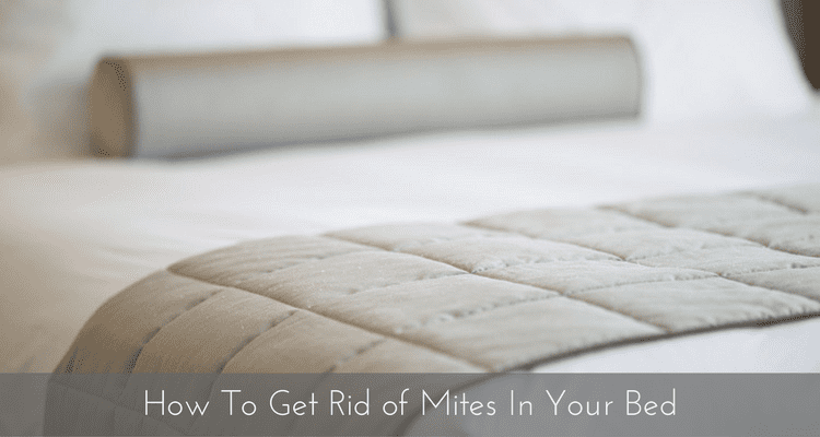 How To Get Rid Of Mites In Your Bed