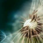 Pollen Dust
