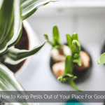 How to Keep Pests Out of Your Place For Good