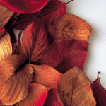 Healthy Home Autumn Tips