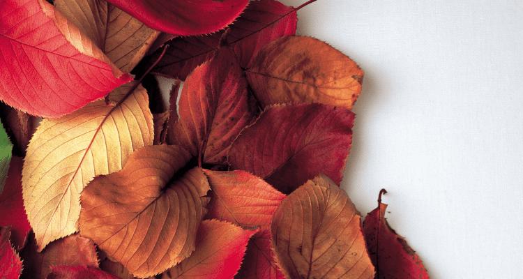 Healthy Home Autumn Tips