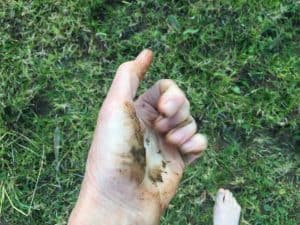Bare Feet Building Biologist
